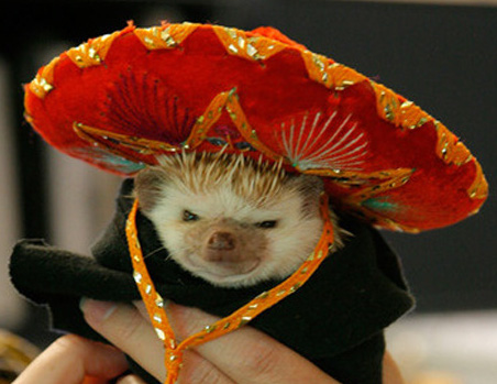 hedgehog_elvis_sombrero_mexican