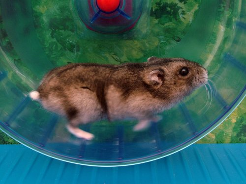 Hamster in a wheel, running just cuz it's fun. Maybe.