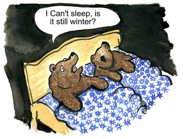 Insomniac Bears